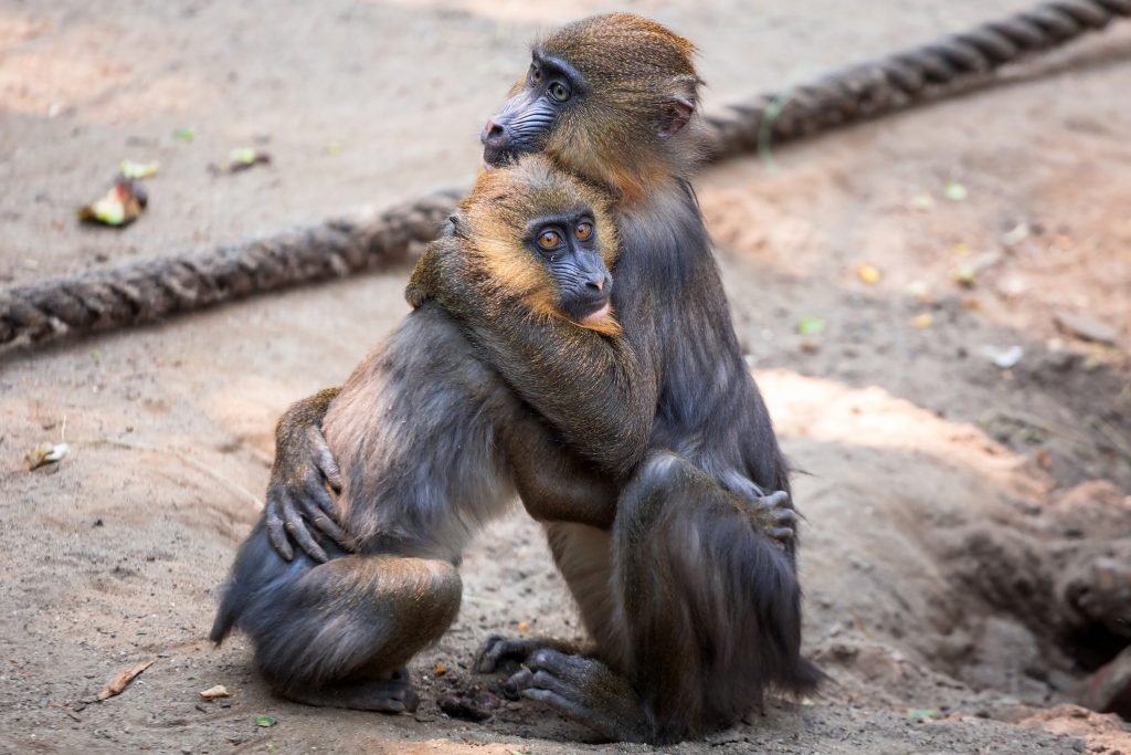 monkeys-at-oliwa-gdansk-zoo